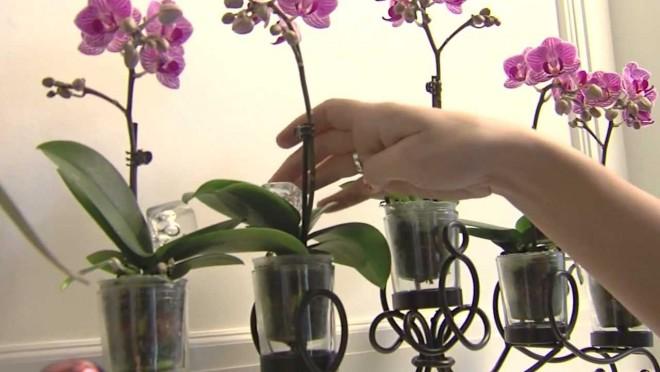 Minden, amit az orchidea-gondozásról tudnod kell!