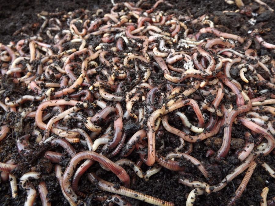 Bőségesen termő kiskertet szeretnél? Tenyéssz gilsztákat!