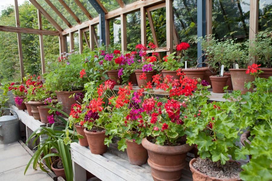 Így teleltesd át a balkonnövényeket!