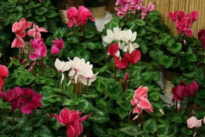 Űzd el a téli depressziót ezekkel a szinpompás növényekkel!