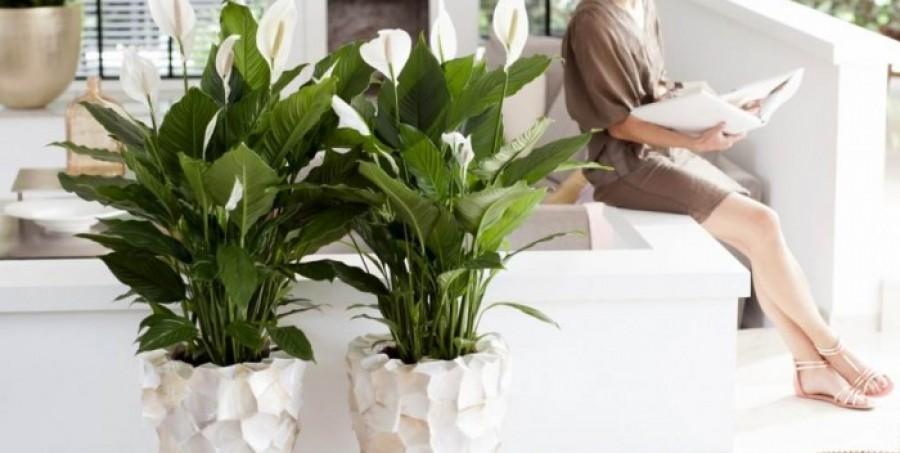 Szobanövények, melyek valódi oxigénbombaként tisztítják meg a levegőt!
