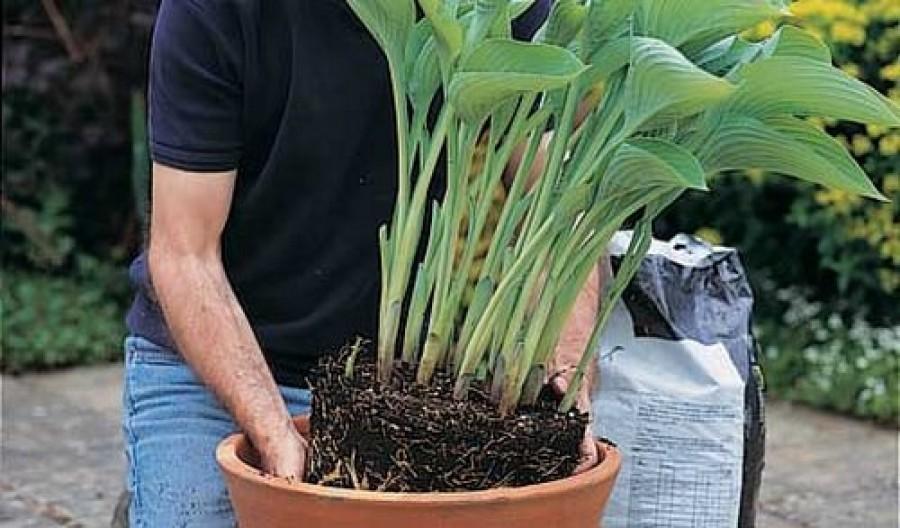 A növények alapvető életfeltételei – 4. rész.