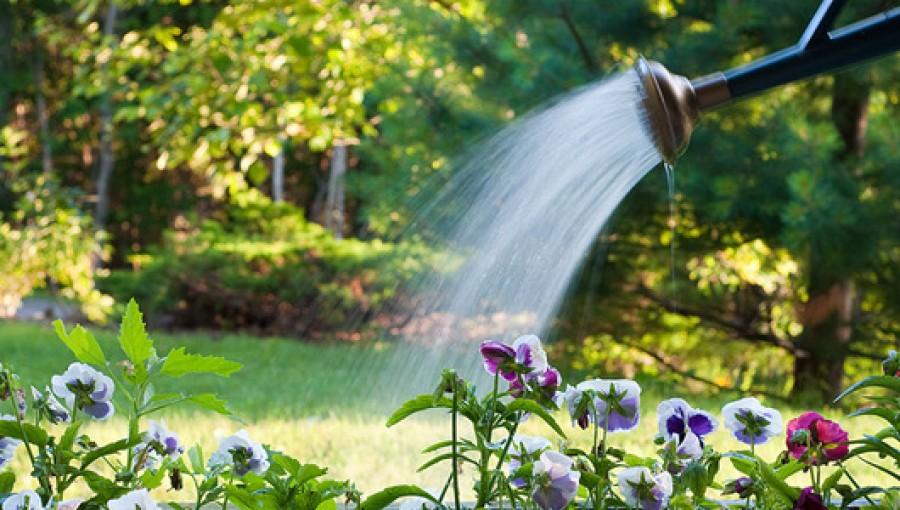 A növények alapvető életfeltételei – 3. rész.