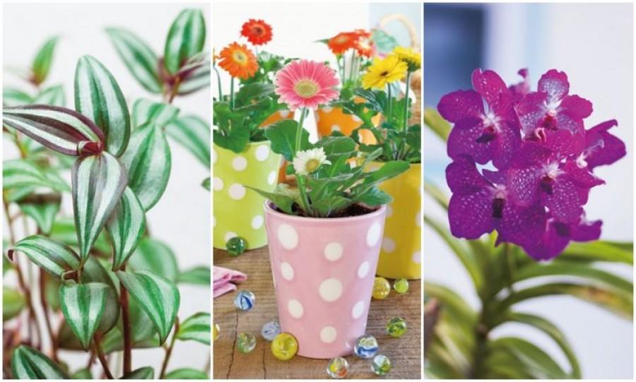 A növények alapvető életfeltételei – 1 rész.