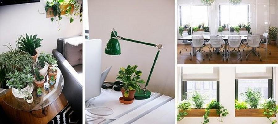 Tartsunk növényeket minden irodában!