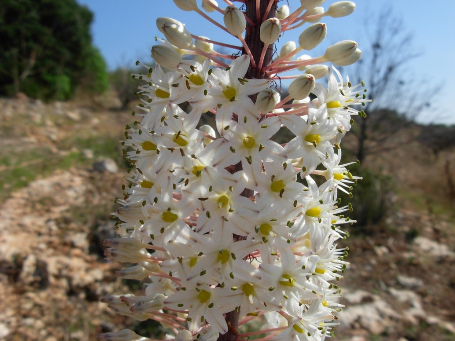 A nagymamám mindig ennek a növénynek a levelét tette a horzsolásomra!
