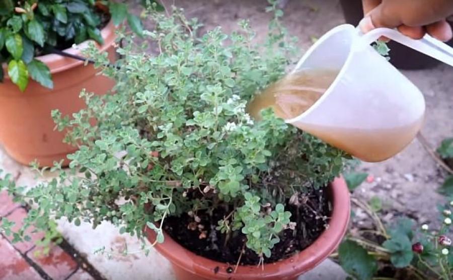5 természetes táp a szobanövényeink számára konyhai hulladékból!
