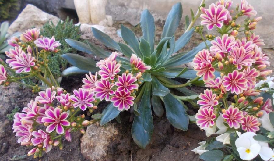 Ha szereted a virágokat, akkor ezt a növényt mindenképpen meg kell ismerned!