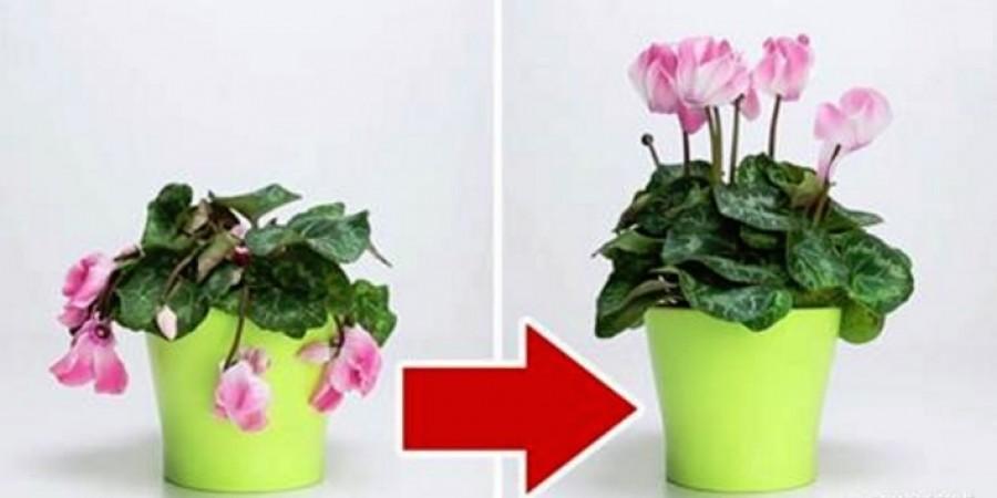 Ezzel a trükkel felélesztheted a haldokló növényeidet!