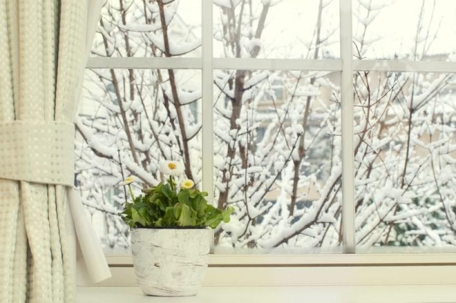 Így ápold télen a szobanövényeidet