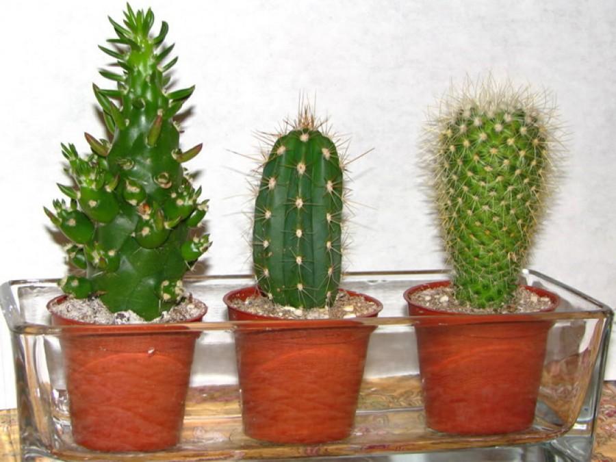 Így éli túl a telet a kaktuszod!