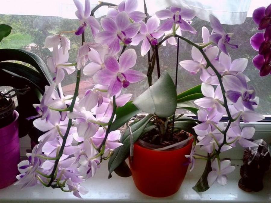 Gyönyörű orchideát szeretnél?