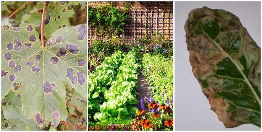 Miért betegszenek meg növényeink?