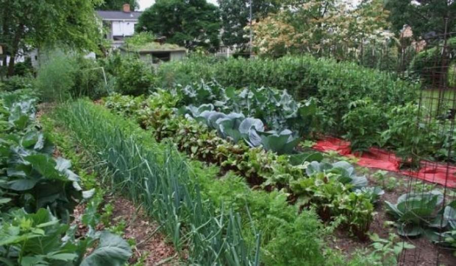 Ezekből a zöldségekből hamarosan hiánycikk lehet a klímaváltozás miatt