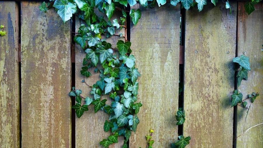 8 növény, amit csak nagy körültekintéssel telepítsünk a kertünkbe