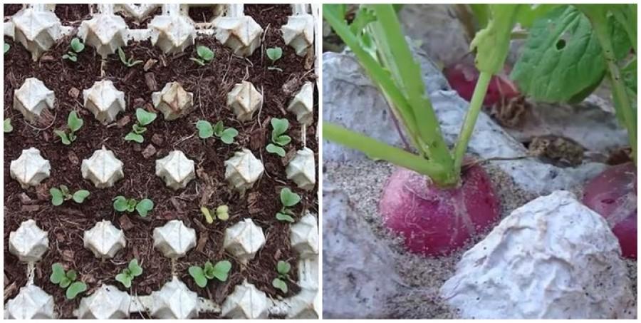 Így termeszthetünk retket a tojástartókban