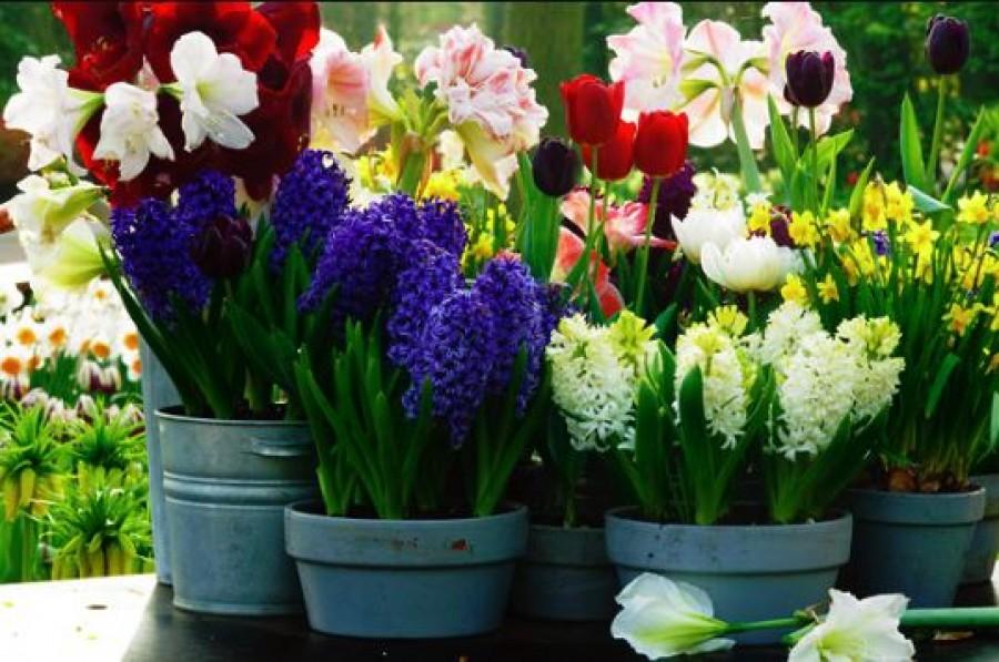 Egy teáskanál cukrot szórt a növények földjére mielőtt megöntözte, azóta rengeteg virágot hoznak!