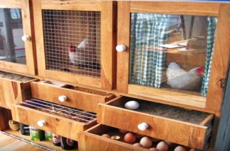Gondoltál már, hogy legyen pár saját csirkéd? Most megjön a kedved! (videó)