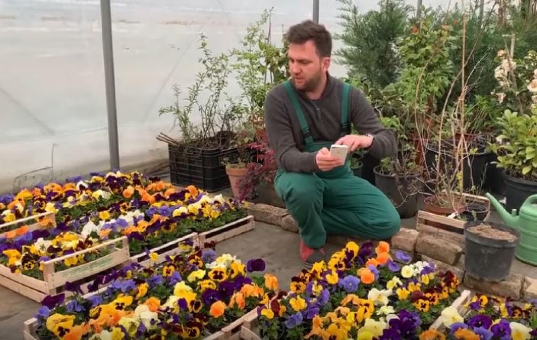 Ments meg egy láda árvácskát és egy magyar virágtermelőt