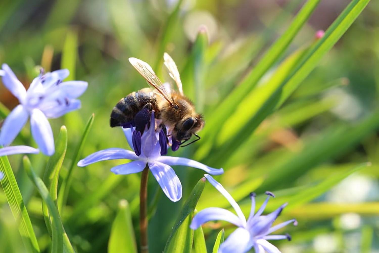 Ljubljana virágzó rétekké változtatja a parkokat a méhek számára