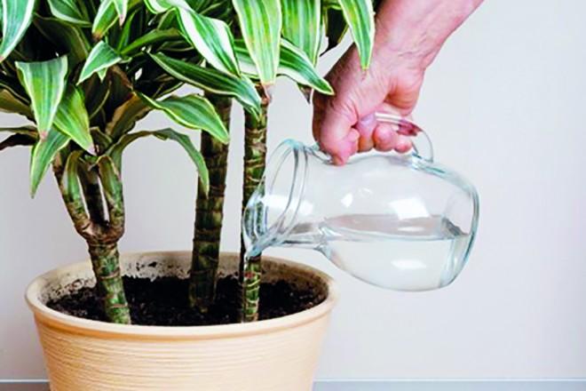 Szuper trükkök, hogy szebbek legyenek a növényeid!