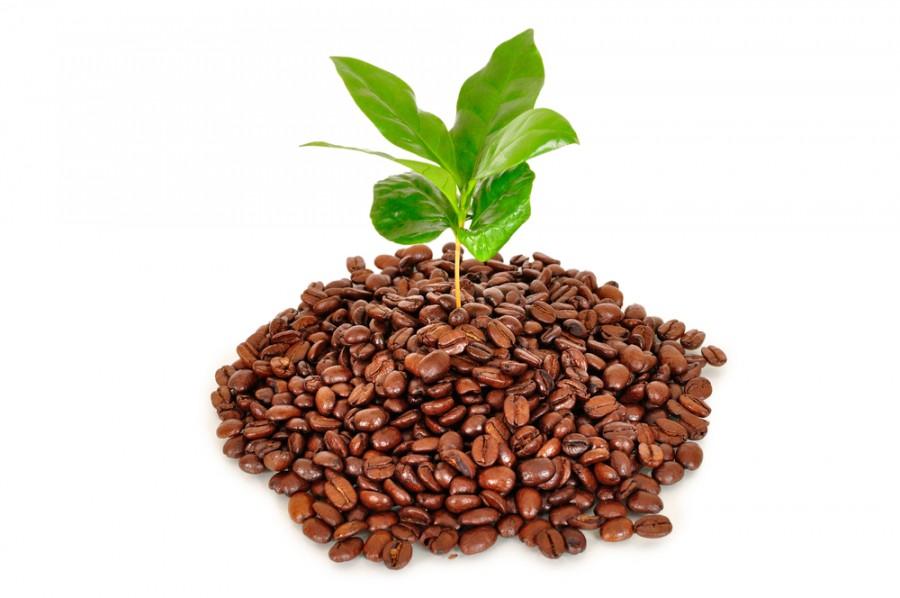 Túl vagy a reggeli kávén? Ki ne dobd a zaccot!!!