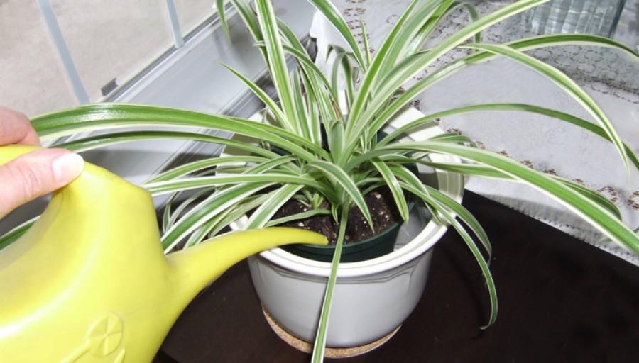 Mit tegyél, hogy jól érezze magát a szobanövényed?