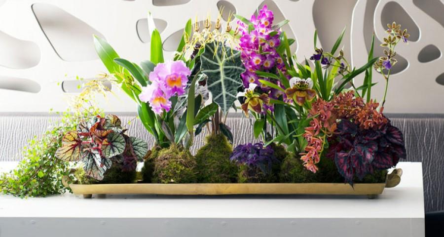 A növények alapvető életfeltételei – 2. rész.