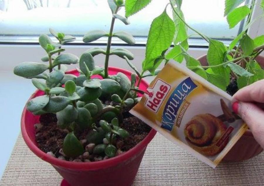 Szórj fahéjat a szobanövények földjére!
