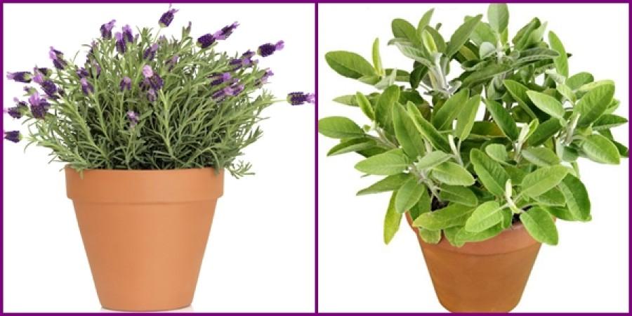 Ebből a növényből mindenképp ültess legalább egy tövet!